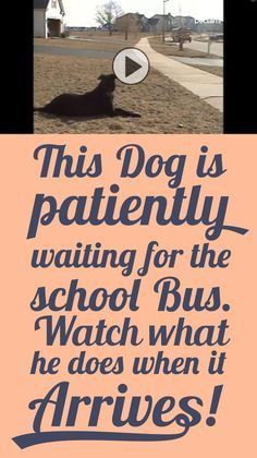 This dog is patiently waiting for the school bus... Watch what he does when it arrives!!: