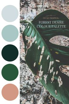 Forest Desire Palette - Oh So Tropical Could use this palette for the blog! #tropicalbathroomvanity