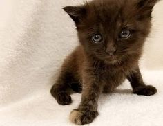 At only four-weeks-old, a tiny tortoiseshell kitten named Burrito is already something special. He was dropped off at the Animal Welfare Association in Voorhees, NJ after being found with his littermates as a stray. The tiny ball of fluff doesn't …