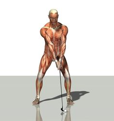 """""""Male Muscles"""" by Friedrich Saurer (computer generated image)"""