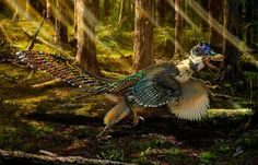 BioOrbis: O primo do Velociraptor