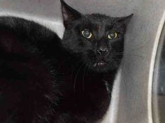 cosmo-a1094363
