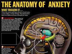 anxiety | Search Results | HEALTH & TRUTH
