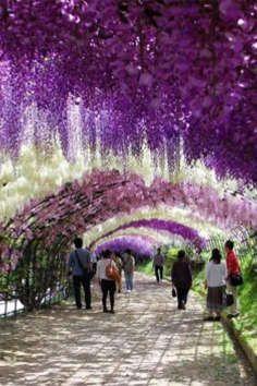Ashikaga Flower Park is a Community Park in 09. Plan your road trip to Ashikaga Flower Park in 09 with Roadtrippers.