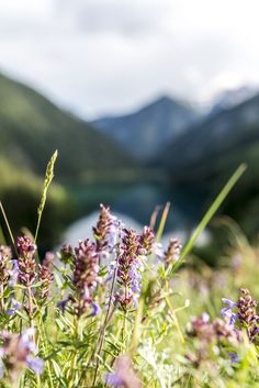 Beautiful Nature in Central Asia Central Asia, Urban, Mountains, Flower, Nature, Plants, Travel, Beautiful, Sun Rays
