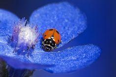 Book Macrofotografía de Naturaleza