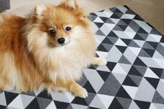 pomeranian, cute dog, dog mat, geometric rug diy