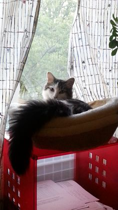 Naiko Cat | Pawshake
