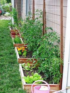 THIS is what I want to do on the East side of the house, mixing food and pretty things. #VegetableGarden