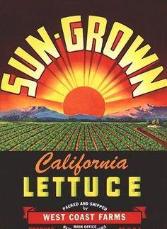 Watsonville, California Lettuce Box Label with Rising Sun, Farm Produce