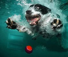 'Underwater Dogs'  Photographs by Seth Casteel