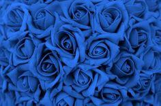 Como cultivar rosas azuis                                                                                                                                                                                 Mais