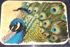Royal Beauty practice piece For sale $15 At the ARTery but I can ship it #madcatkreations #animal #bird #peacock #peafowl #fowl #beautiful