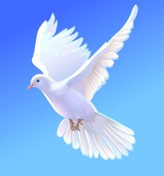 Store photos and docs online. Dove Images, Dove Pictures, Jesus Pictures, Beautiful Nature Pictures, Beautiful Nature Wallpaper, Nicolas Vanier, Photo Background Images Hd, Kitten Images, Polygon Art