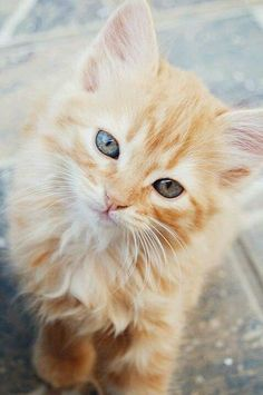 What a pretty, fluffy kitty cat. And those eyes!