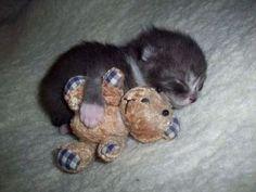 A tiny kitten cuddling with a stuffed animal teddy bear.