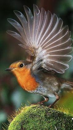 Beautiful take off