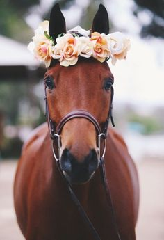 Flower crown- Andreea Mitea Check more a. - Flower crown- Andreea Mitea Check more at www… Cute Horses, Horse Love, Beautiful Horses, Animals Beautiful, Pretty Animals, Majestic Animals, All The Pretty Horses, Cute Little Animals, Cute Funny Animals