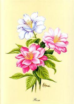 Imagens - flores - Angelines-NINES - Picasa Web Album