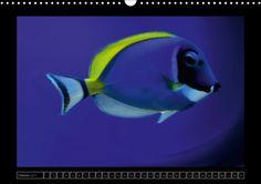 Kalendarische Unterwasserwelt - CALVENDO
