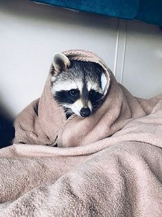14 Funny Raccoon Pictures That Will Make You Smile! Raccoon Drawing, Pet Raccoon, Cute Baby Animals, Animals And Pets, Funny Animals, Strange Animals, Blaues Make-up, Animal Sketches, Cute Animal Pictures