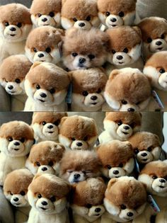 Spot the intruder | Teh Cute - Cute puppies, cute kittens & other adorable cute animals