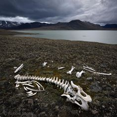 Photo by @shonephoto (Robbie Shone) - The harsh environment of Kronprins Christian Land in northeast Greenland has weathered the remains of this Musk Ox skeleton over time. The peninsula in the lake was the site of our base camp only a few weeks ago as part of @negreenland_caves research expedition supported by the National Geographic Committee for Research and Exploration. by natgeo