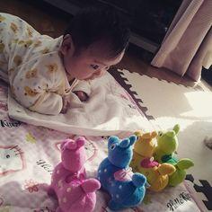 Instagram media erimacyu - ロディいっぱいに驚く娘もう親バカゎ止められない。。。#3ヶ月#星恋ちゃん#ロディ
