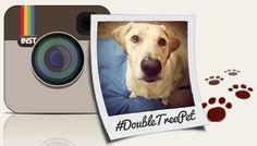 Instagram Pet Photo Contest #DoubleTreePet