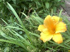 Blumenflors sind offenbar sehr beliebt bei unseren LeserInnen. Danke an unsere Leserin im Burgenland. Plants, Flowers, Most Popular, Thanks, Flora, Plant, Planting