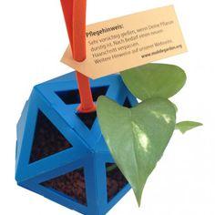 Mobile #Garden Readymade (hellblau) Der Mobile Garden Readymade kommt mit: dem #Blumentopf (bereits zusammengebastelt), einem Gummiband, einer Pflanze (#Efeu) und dem Granulat oder der Erde.  Über das Produkt  Mit dem #MobileGarden Readymade bekommst Du einen zusammengebastelten Mobile Garden. Granulat und Pflanze sind mit dabei. Du musst nur die Box öffnen, die Verpackung entfernen und schon kannst Du mit der Pflege beginnen und den Mobile Garden – wenn gewünscht – auf Planthub.de…