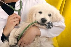 Why Give the Vet Your Pet's Medical History? Because It Helps — A Lot.