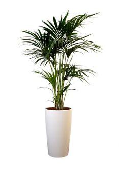 Mooie kamerplant want ik hou van groen in huis