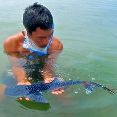 The smallest whale shark ever found