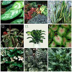 HGTVGardens Indoor Shade House Plants Variegated Leaves
