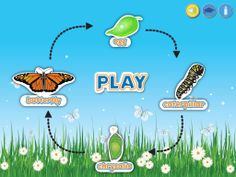 Butterfly life cycle - have fun while you learn!