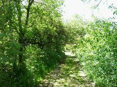 Der Weg ist das Ziel - zumindest ist er sehr schön... Country Roads, Goal, Nice Asses