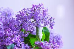 название домашних цветов цветущих