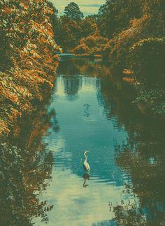 #heron #copenhagen #landscape in Archive