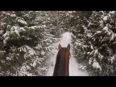 First Trail Ride with GoPro! Horse back riding in Canada