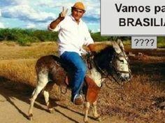 Candidato promete pedir votos percorrendo a Paraíba montado em um jumento | Umbuzeiro Online