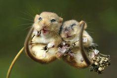 Smiling Door Mice | Best animal photographs of the year - Yahoo News UK