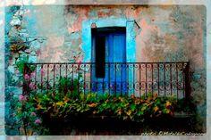 Snapshots :: Malanotte, Buonanotte or…   photo: ©MateldaCodagnone