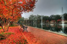 University of South Carolina Campus in fall. Two of my most favorites