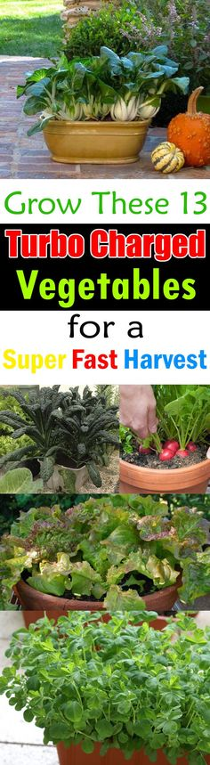 If you are new to gardening or get little impatient when growing vegetables-- Must see this list of Fast Growing Vegetables. All vegetables in this list can be grown in containers and harvested in 2 months or quicker.