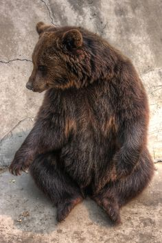 I love bears!