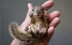 Baby squirrel cast with a boo boo, poor lottle guy. Description from pinterest.com. I searched for this on bing.com/images
