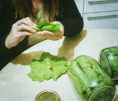 Eva In Tasteland: Αμπελόφυλλα Συντήρηση Greek Recipes, Fresh Rolls, Food Hacks, Cooking Tips, Cucumber, Vegetables, Ethnic Recipes, Blog, Greek Food Recipes
