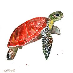 Sea Turtle. Original watercolor painting, 12 X 12 in, (30 X 30 cm), scarlet, olive green sap green, indigo animal art, sea animals,