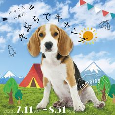 #sushi #動物系バナー #cute #かわいい #お寿司 #キャンペーン #特集 #特集バナー #犬 #動物 #animal #dog #dogs #summer #portfolio #banner #制作実績 #バナー制作 #バナー作成 #webデザイン #デザイン勉強 #webdesign #ポートフォリオ #アイキャッチ #icon #image #campaign #cat #present #simple #柴犬 #和風 #犬系 #猫系 #ペット #ペットバナー #ビーグル #ビーグル犬 #キャンプ #キャンプバナー #アウトドア #アウトドアバナー #野外 #屋外 #テント Camping, Design, Campsite, Campers, Tent Camping, Rv Camping